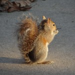 Squirrel eating a seed as bathed in the rising sun