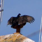 Turkey vulture perched on top of fire tower